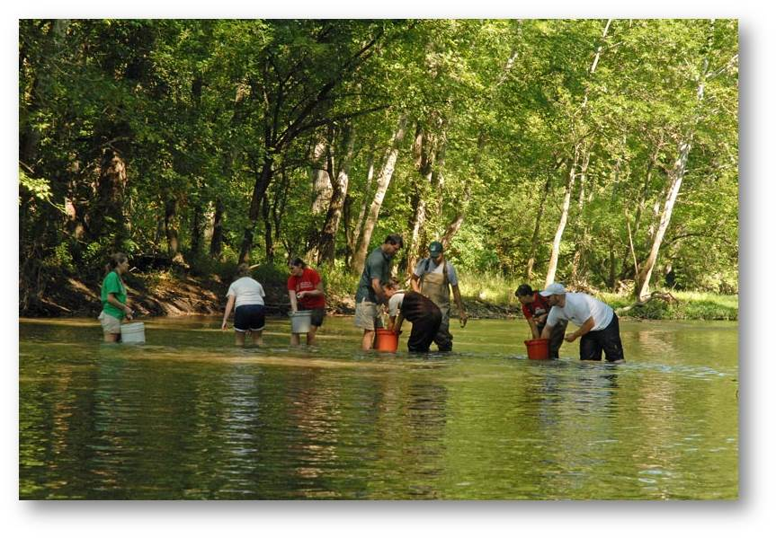 Release of tagged individuals to a site on Big Darby Creek