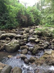 Creek in Hortorium, UPLB campus