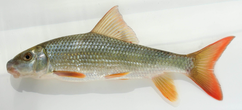 fish | OSU Bio Museum