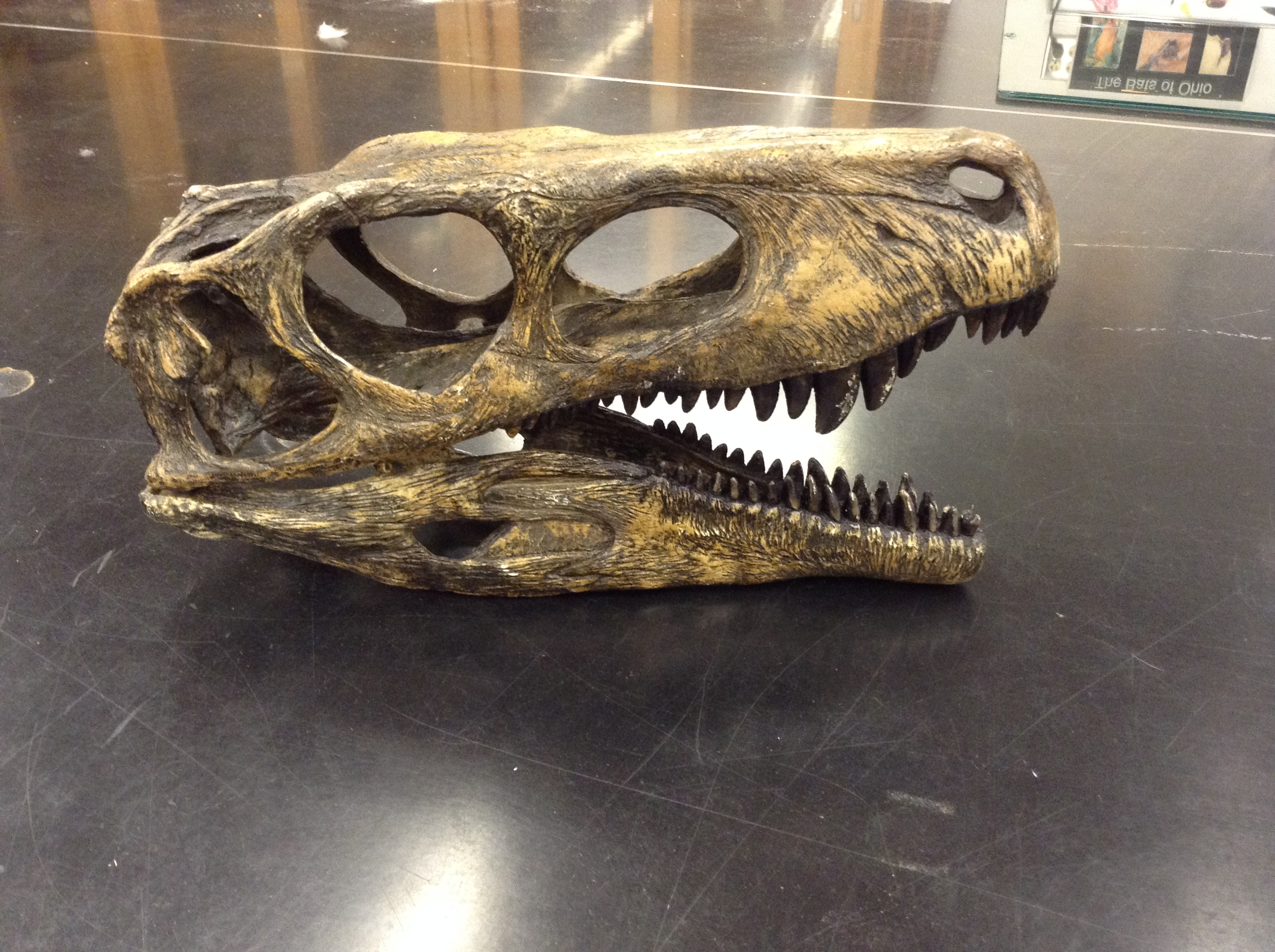 Am I or Am I Not a Dinosaur? Skull Identification Quiz | OSU Bio Museum