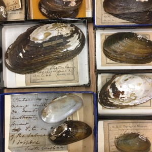 Some of the Hildreth Collection specimens showing different labels as they passed from hand to hand over time.