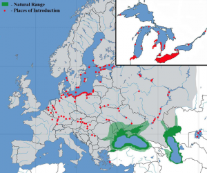 map of Round Goby invasion in Europe