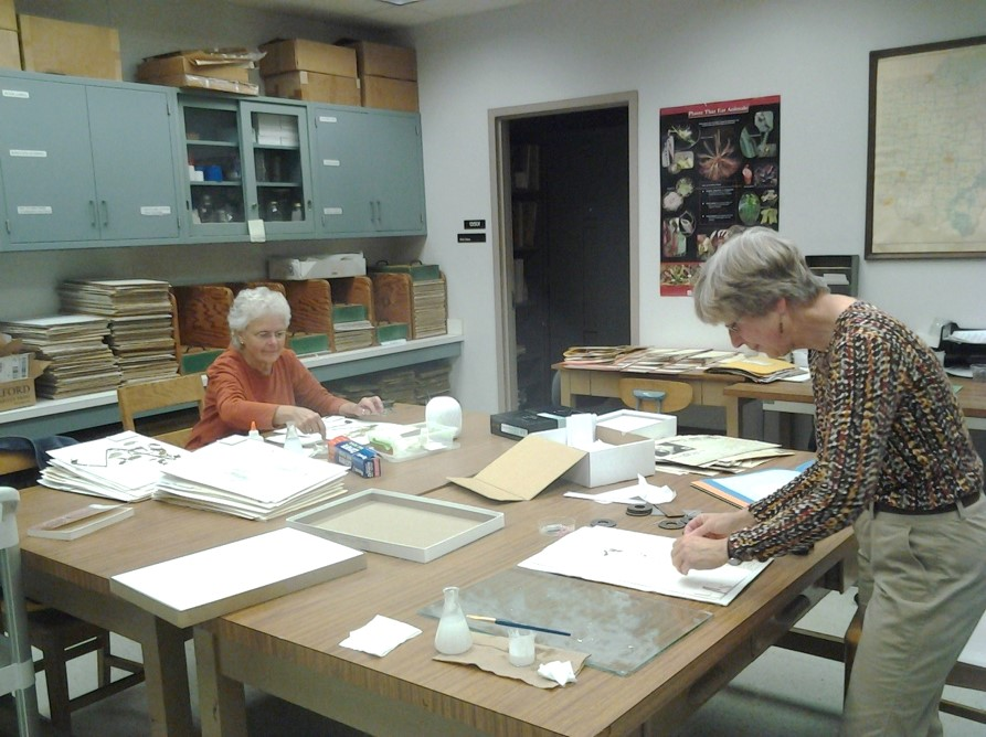 Two of our long-time volunteers working in the herbarium