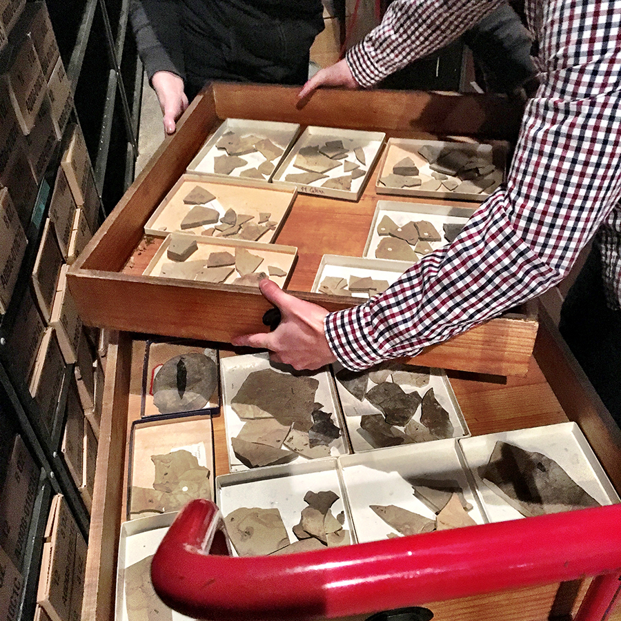 Move of the fossil collection