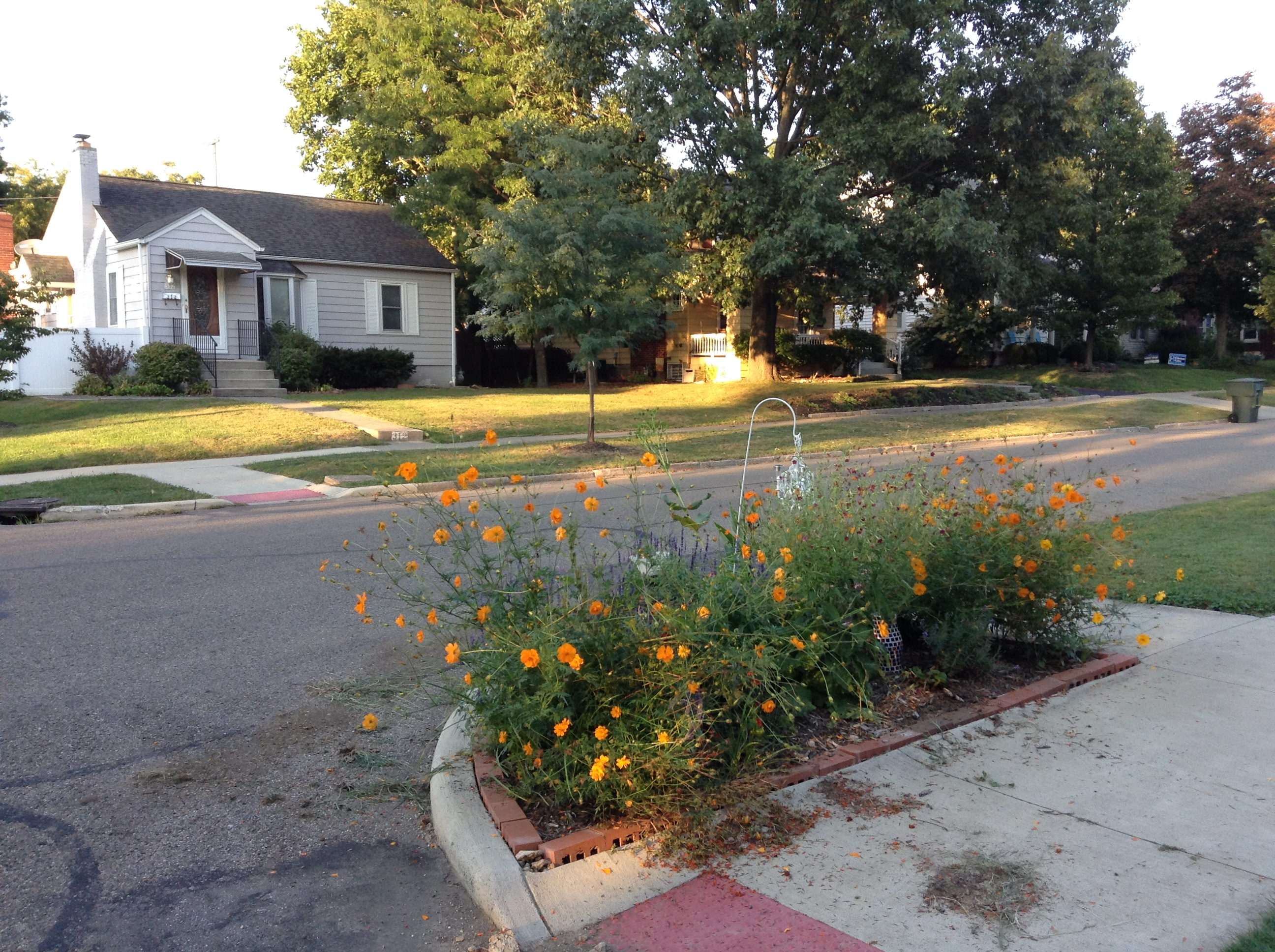A rain garden at the corner of Chatham rd and Sharon ave Clintonville