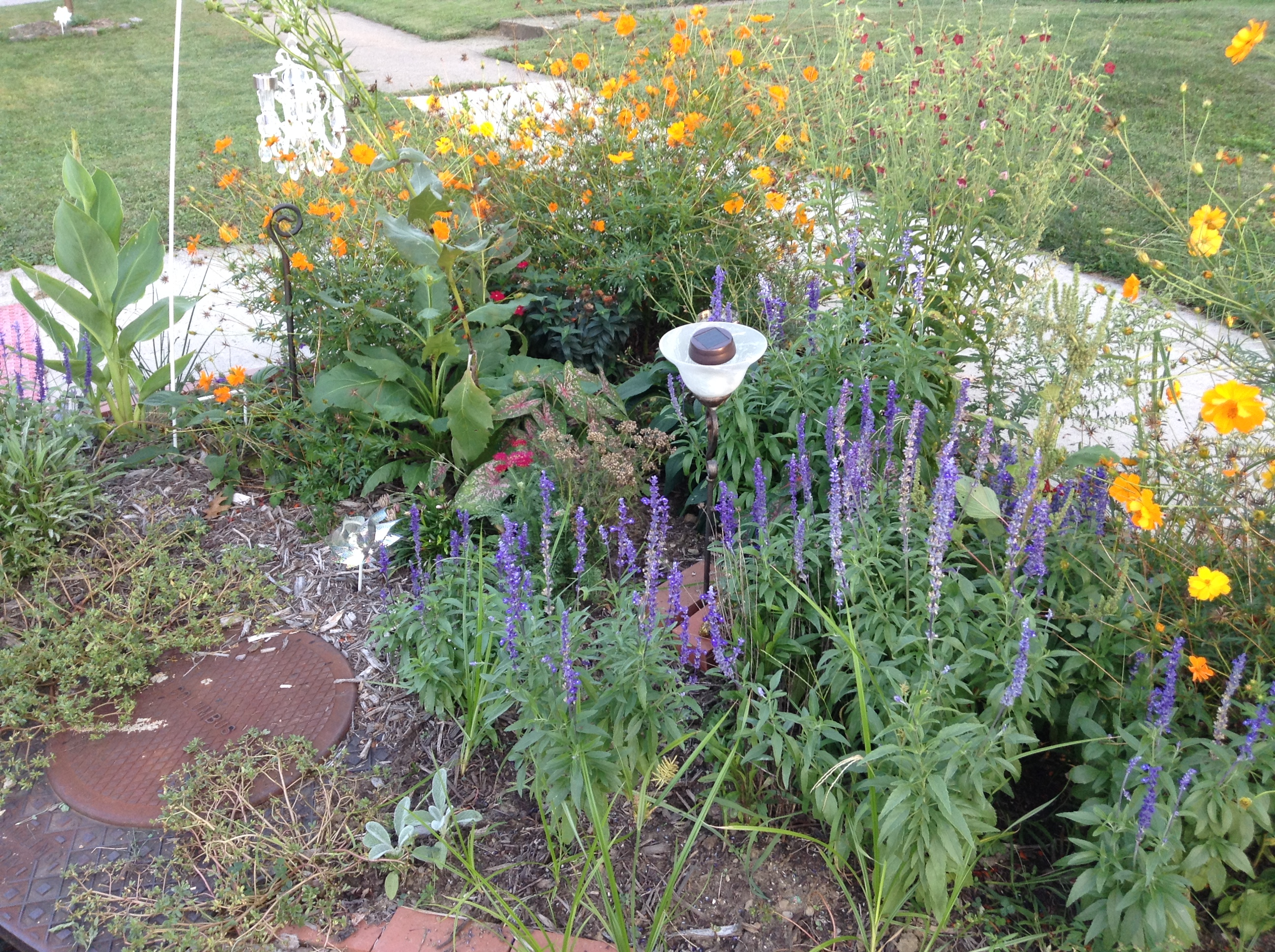 close-up of a rain garden in Clintonville