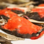 Vermilion Flycatcher specimen - close-up