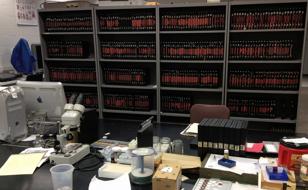 Shelves with slides of tick & mite specimens in teh acarology collection