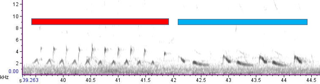 spectrogram of female and male Northern Cardinal song