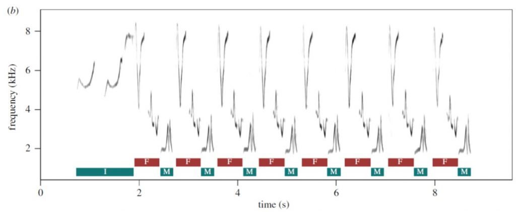 Spectrogram of highly coordinated Plain Wren duet