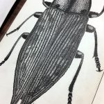 Eastern Poplar buprestid, Poecilonota cyanipes,(Say), illustrated by Knull.
