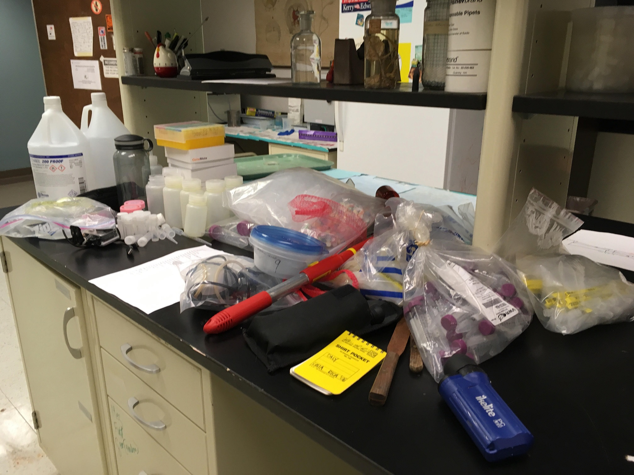 Sampling gear for sea anemone research staged in the lab