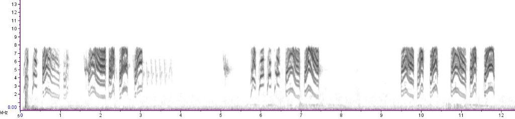 Spectrogram of calls of Blue-gray Gnatcatcher
