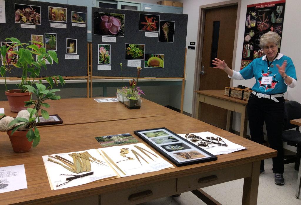 Donna Schenk with herbarium display