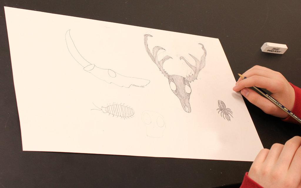 drawing of deer antlers