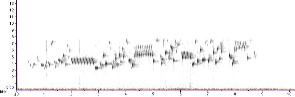Spectrogram of song of Winter Wren
