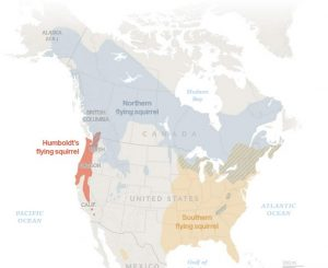 Map showing distribution of now 3 species of flying squirrels