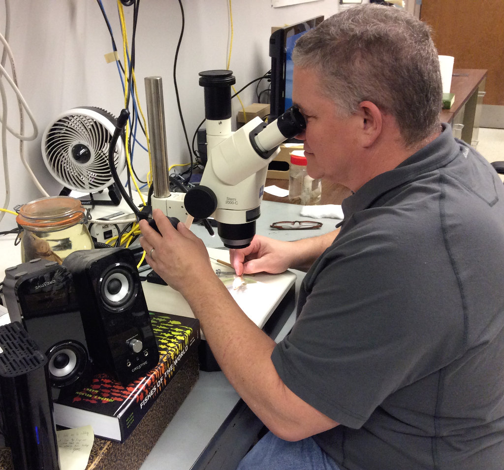 Marc Kibbey, curator of fishes, looking through microscope