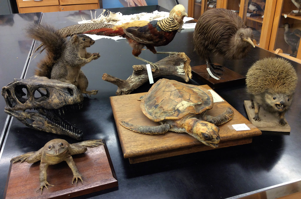 these are tetrapods: bullfrog, turtle, hedghog, squirrel, birds