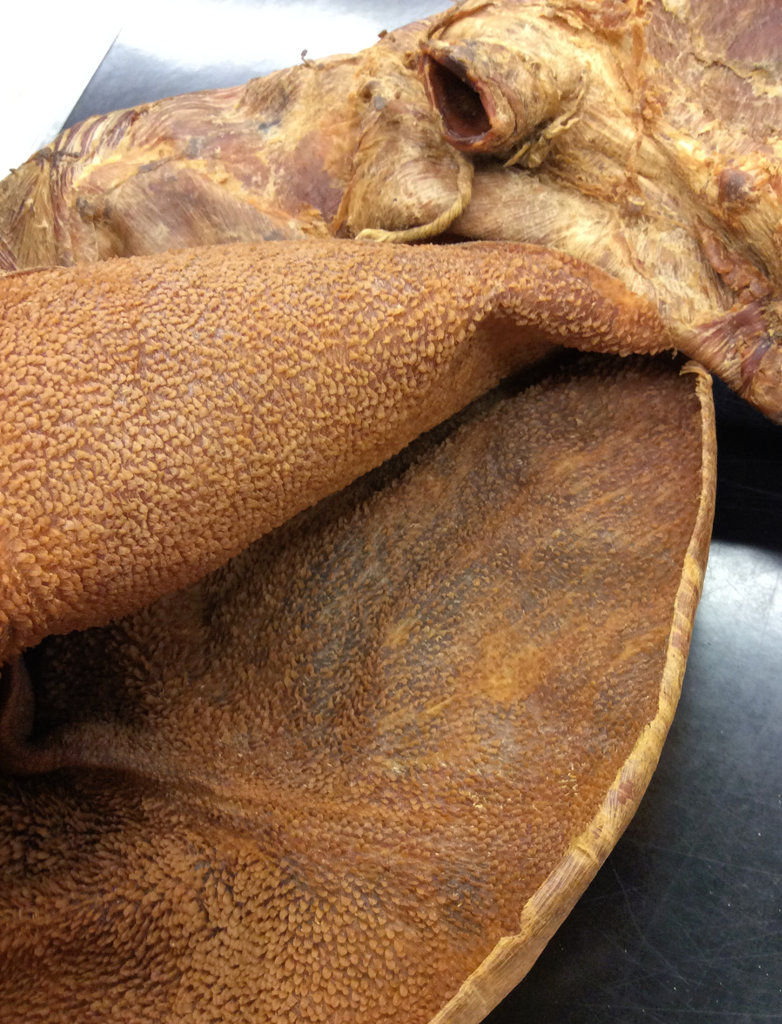 the inside of a sheep stomach with papillae
