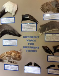 display of different wings for different things