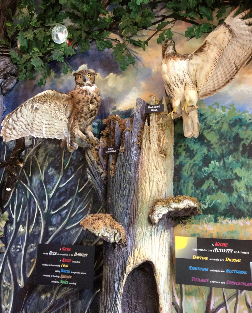 display of owl and hawk