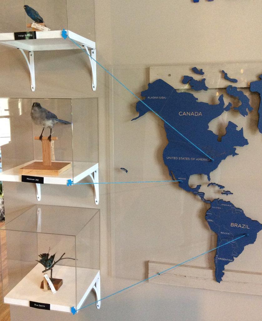left side of display with blue specimens