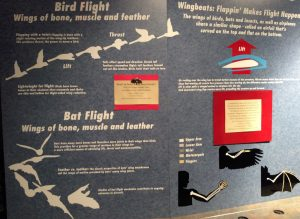 display explaining Bird Flight