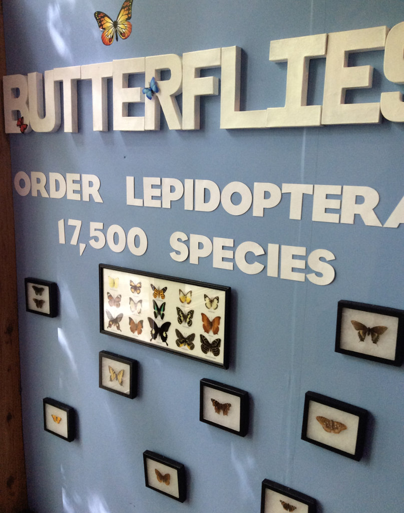 display with Butterflies
