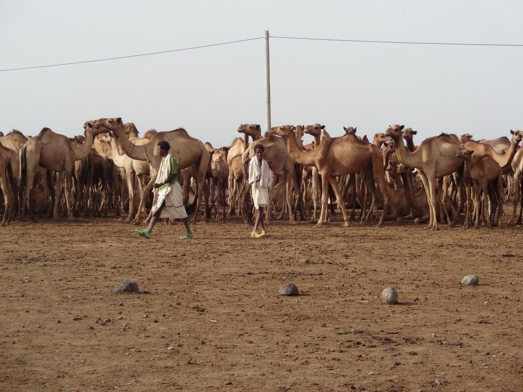 Camels and Pastorals