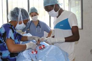 belu-surgery-spayneuter