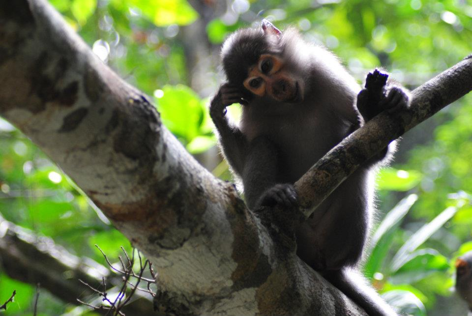 primatology lab
