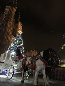 A white, horse drawn carriage, with lighted Christmas tree in the background