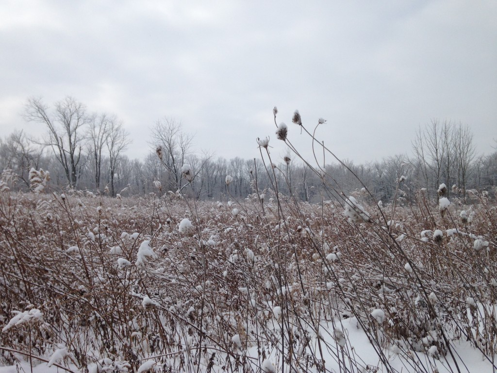 Highbanks Metro Park in Columbus Ohio cross-country ski trail February 2015. Photo by M. Durand.