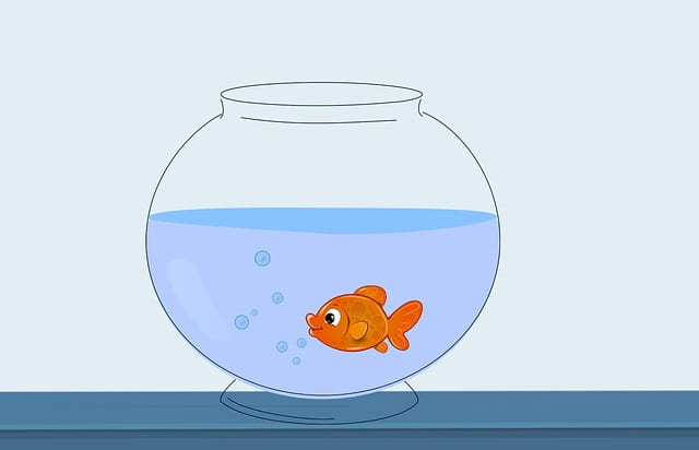 Image of a fish in a fishbowl
