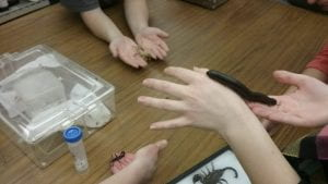 hands holding various arthropods