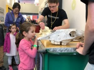 A volunteer showing skulls to kids at COSI