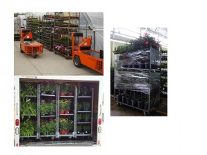 Figure 2.  Open carts are an ideal way to ship ethylene sensitive crops because it allows air movement around the plants and protects them from damage.  Always use electric pull-carts to transport the plants to the shipping area.  If carts are shrink wrapped (right photo), make sure the plastic is holding them in pace but not completely sealing them in.