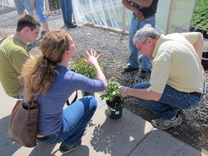 Shaun conferring with Drs. Francesca Hand and Claudio Pasian during an extension visit to a local greenhouse.