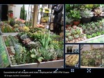 Succulents at IPM Essen