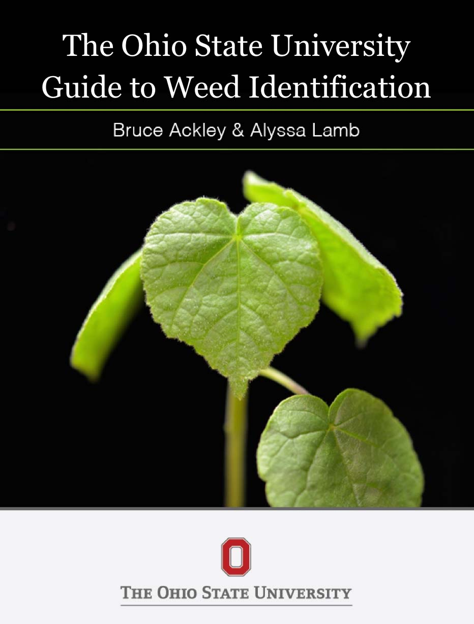 thesis on weed science weed control Non-chemical weed control methods need to be directed towards a site-specific  weeding  ultrasonic sensors are robust, low cost devices which have been  used in weed science research  rueda-ayala vp phd thesis.