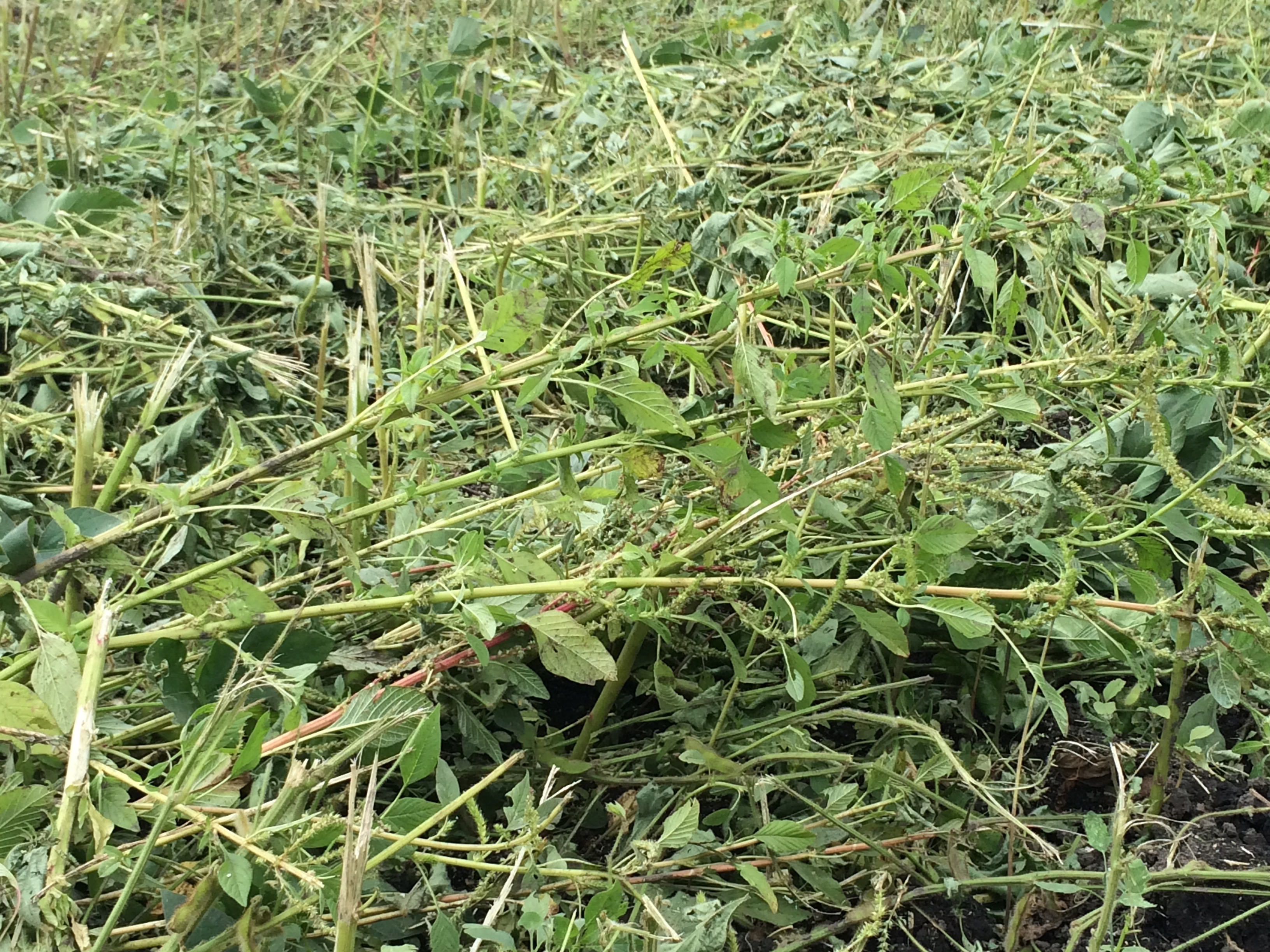 osu weed management information about weeds and herbicides for
