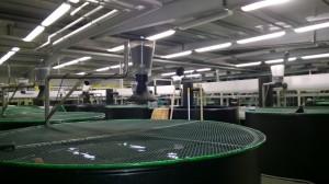 Recirculating Aquaculture System for research.