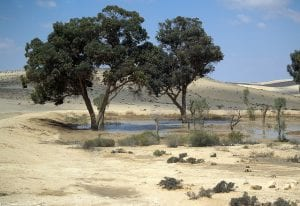 Image of an Oasis in Israeli Desert