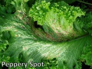 PepperySpot