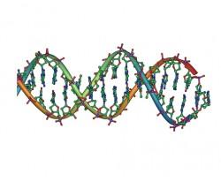 DNA public domain