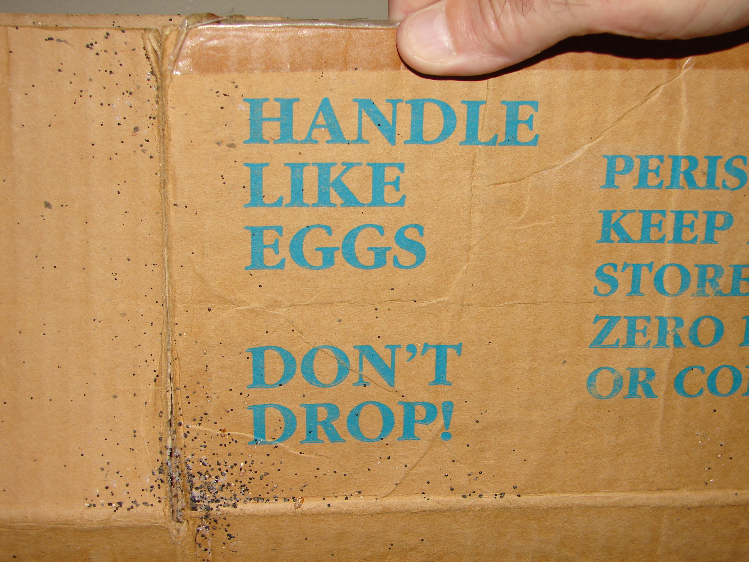 bed bug eggs and feces on cardboard box & bed bug eggs and feces on cardboard box | Bed Bugs Aboutintivar.Com