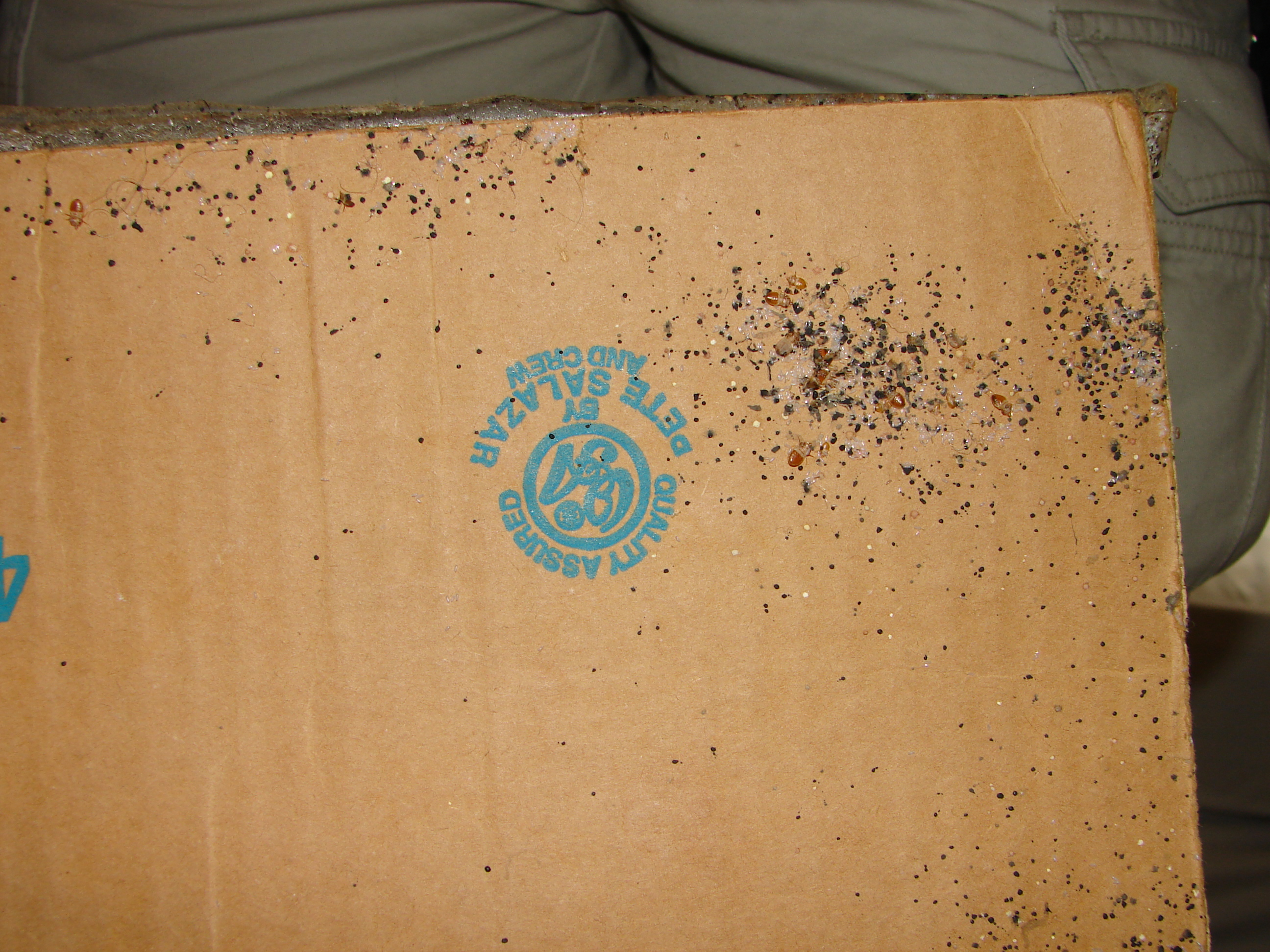 Bed Bugs Eggs And Feces On Cardboard Box Bed Bugs