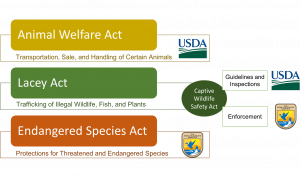 This image summarizes three federal policies: Animal Welfare Act, Lacey Act, and the Endangered Species act and the responsible agencies (FWS and USDA).