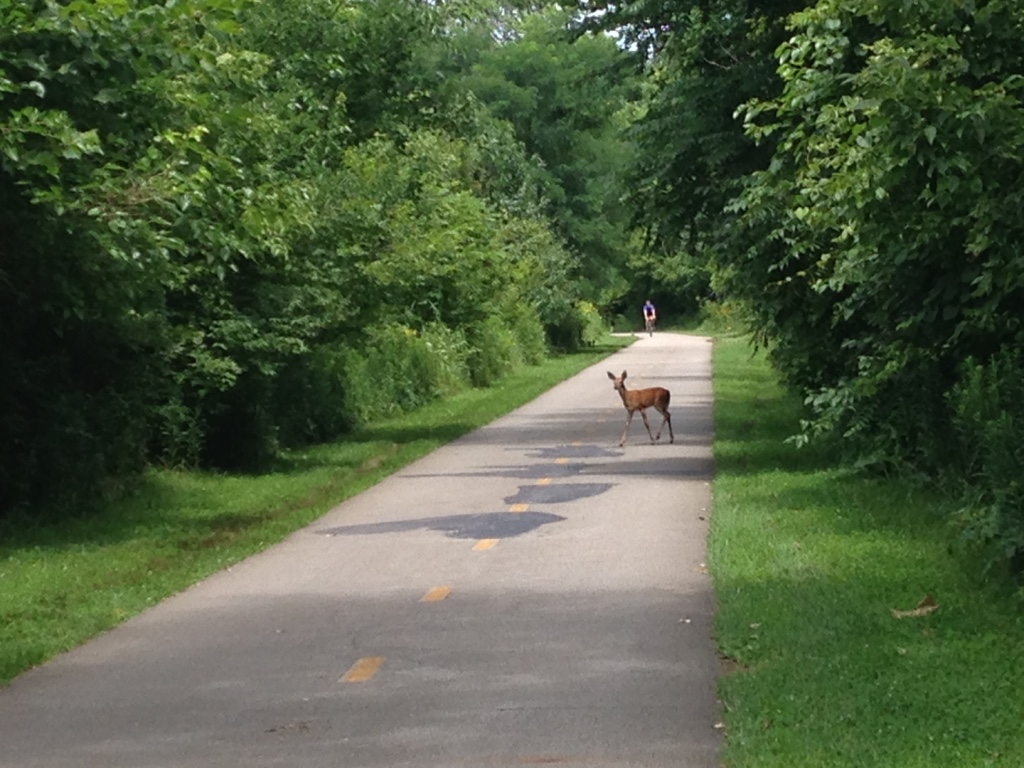 The Olentangy Trail Columbus To Do List